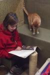 Proyecto lector con gatos