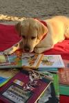 Programa de lectura con perros