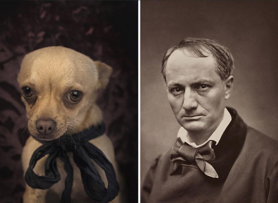 Gran parecido entre Charles Baudelaire y este perrito