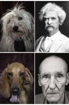 escritores perros destacado
