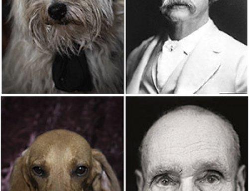 Parecidos razonables: perros y escritores