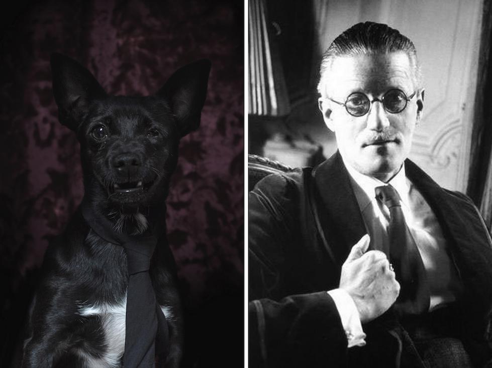 James Joyce y su doble perruno: el parecido es obvio
