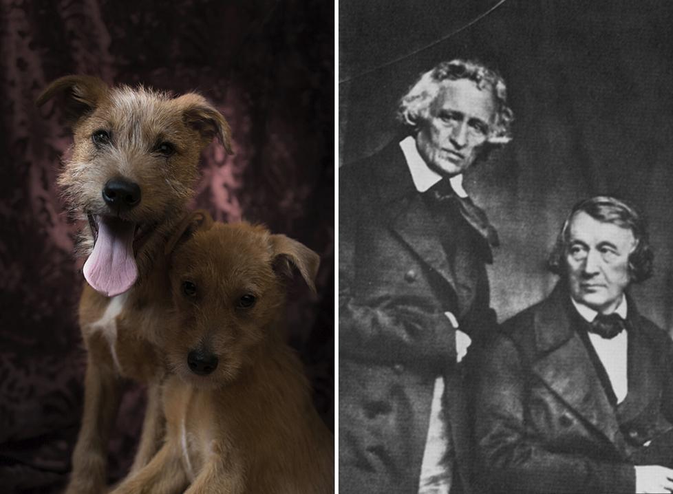 Los hermanos Grimm y los perritos imitadores